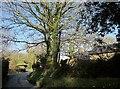 SX2577 : Lane past  Stonaford House by Derek Harper