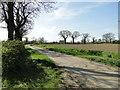 TM1781 : Langmere Road, Dickleburgh by Adrian S Pye