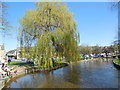 SP1620 : Weeping Willow by River Windrush by Paul Gillett