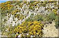 J4772 : Whins, Scrabo Country Park, Newtownards - April 2015(3) by Albert Bridge