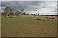 NJ6727 : Old Rayne Recumbent Stone Circle (3) by Anne Burgess