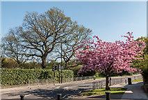 TQ3096 : Bincote Road, Enfield by Christine Matthews