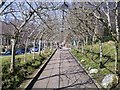 C0423 : Rowan walkway, Glenveagh by Rossographer