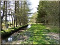 NT3407 : Picnic site, Craik Forest by Oliver Dixon