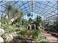 NT2475 : Inside the Glasshouses of the Royal Botanic Garden Edinburgh by Graham Robson