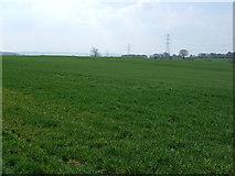 NZ1368 : Crop field near East Heddon by JThomas
