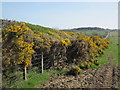 NU1405 : Gorse Hedge by Les Hull