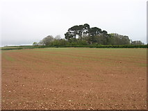 SY0984 : Farmland near Otterton by David Purchase