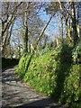 SX2084 : Lane at St Clether by Derek Harper