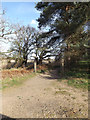 TM4056 : Suffolk Coast Path at Iken Cliff Picnic site by Adrian Cable