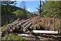 SH8210 : Pile of logs by Nigel Brown