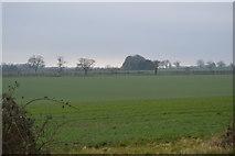 TG0705 : Farmland South of Norwich Rd by N Chadwick