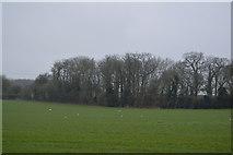 TG0705 : Bullmoor Strips by N Chadwick