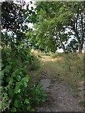SU6570 : Sheffield Bottom Lake Pathway by Liam Drew