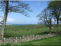 NU1535 : Coastal grazing, Budle by JThomas