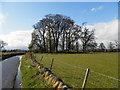 NN9223 : Field at New Fowlis by Douglas Nelson