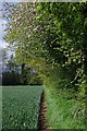 TQ6593 : Footpath at Apple Blossom Time by Glyn Baker