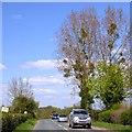 SO4968 : Trees with mistletoe by David Smith