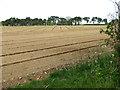 TF7902 : Cultivated field by Limekiln Plantation by Evelyn Simak