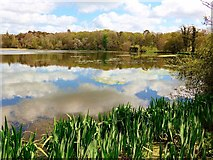 NS2209 : Cloud reflections on the Swan Pond by Gordon Brown