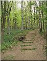 SS7986 : Graig Fawr wood, Margam by eswales