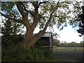 SU7079 : Entrance to field on Kidmore Lane by David Howard