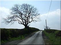 NZ1368 : Minor road towards East Heddon by JThomas