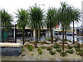 H4572 : Palm trees, Omagh by Kenneth  Allen