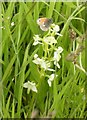 NS6158 : Butterfly and Butterfly Orchid by Richard Sutcliffe