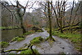 SX5259 : Path by the River Plym by N Chadwick