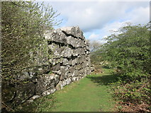 SX3771 : Big Rock Wall by Des Blenkinsopp