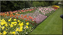 TQ2979 : View of a bright floral display in St. James's Park #3 by Robert Lamb