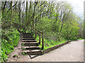 SJ8462 : Steps up from Astbury Mere by Stephen Craven