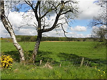 H5559 : Tree, Garvaghy by Kenneth  Allen