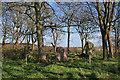 NK0257 : Berrybrae Recumbent Stone Circle (1) by Anne Burgess