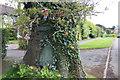 SY4293 : The Wishing Tree, Chideock by John Stephen