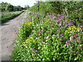 TL4605 : Driveway to Orchard Farm by Marathon
