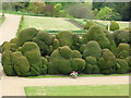 SP8691 : Looking down on the Elephant Hedge - Rockingham Castle by Richard Humphrey