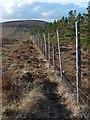 NC8724 : Forest boundary, Borrobol, Sutherland by Claire Pegrum