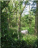SP2865 : Tidy tent in an out-of-the-way corner of Priory Park, Warwick by Robin Stott