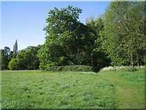 SP2865 : Trees along the northeastern edge of lower Priory Park, Warwick by Robin Stott