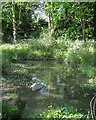 SP2865 : Almost a pond along St John's Brook, Priory Park, Warwick by Robin Stott