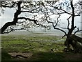 SZ7899 : Chichester Harbour mudflats near Rookwood by Rob Farrow