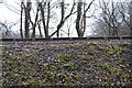 SX5157 : Plym Valley Railway by N Chadwick