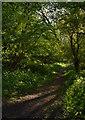 SU3454 : Footpath near Rushmore Down, Hampshire by Edmund Shaw