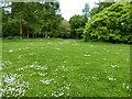 SJ8071 : Daisies in the greensward by Philip Platt