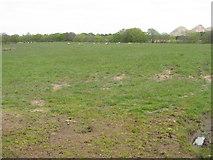 NS9864 : Sheep pasture near Addiewell by M J Richardson