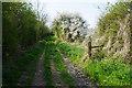 TL6570 : Track to Chippenham Fen by Bill Boaden