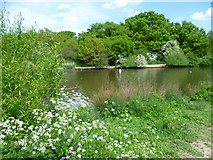 TQ4095 : The southern end of Connaught Water in Epping Forest by Marathon