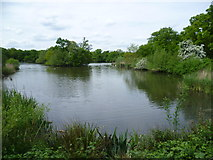 TQ4095 : Connaught Water in Epping Forest by Marathon